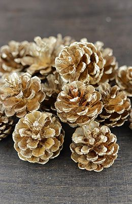 5.99 SALE PRICE! Decorate your holiday arrangements with these Gold Pine Cones. The brushed metallic pine cones come as a 1/2lb bag and each one measures rou...