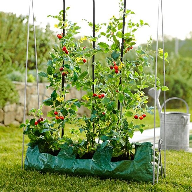 The 25 best How to grow tomatoes ideas on Pinterest Grow