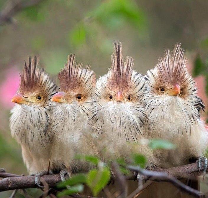 Pin by Kurdistan on Natur | Unusual animals, Colorful birds, Birds