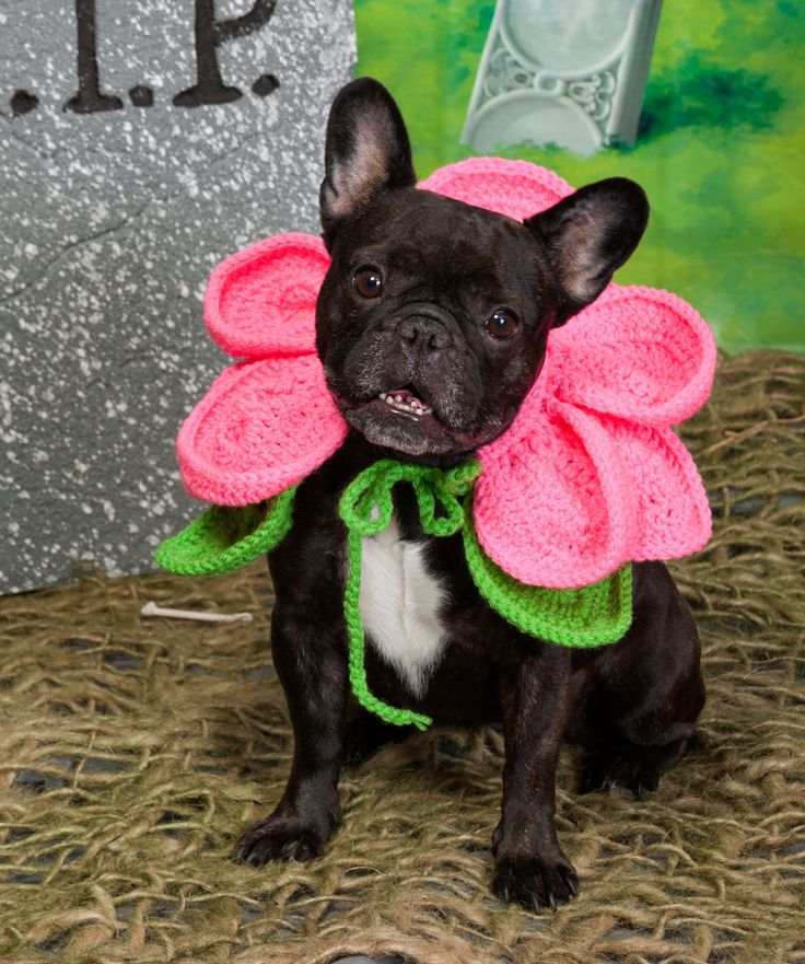 blooming dog halloween crochet pattern dog costume from heart yarns - How To Make A Dog Halloween Costume