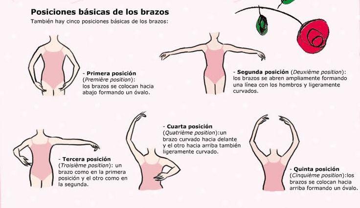 Posiciones básicas de los brazos
