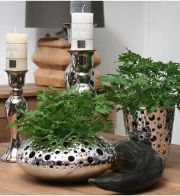 Pelargonium citrosum, smells like lemon. Some say it scares the mosquitos.