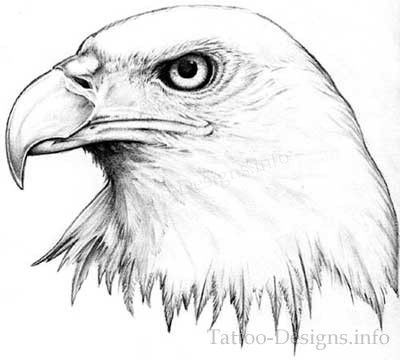 Black and White American Bald Eagle Head Tattoo Sketch