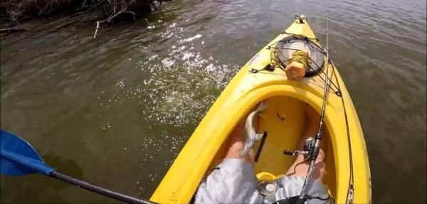 Fish jumps back into kayak after being released