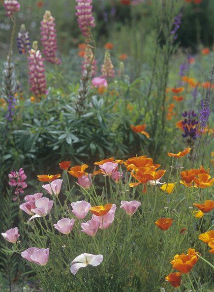 Contemporary Garden Photo - Lonny
