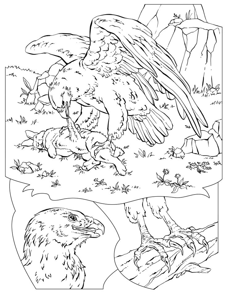 National geographic bird coloring pages coloring page for National geographic coloring pages
