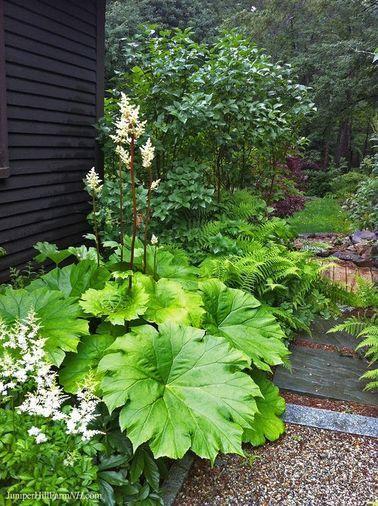 Le jardin zen se pare de massifs de plantes à larges feuilles
