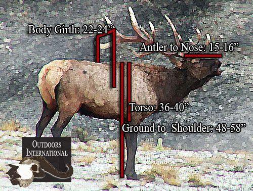 5 Steps to Field Judging Elk:  http://gothunts.com/about-us/hunting/elk-hunting/#Elk-Hunting-Resources