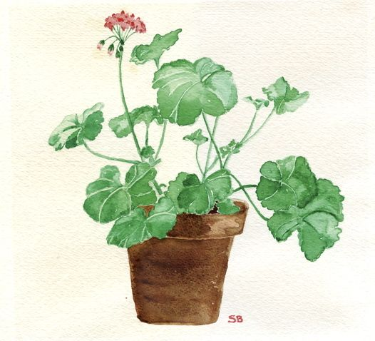 Geranium by Susan Branch.   Her 1st watercolor painting.