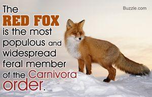 Image result for fox information