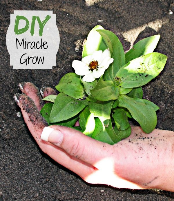 """There is an easy to fertilize your plants without store bought chemicals! There are several ways to do this. Some are touted as """"Home Made Miracle Grow."""""""