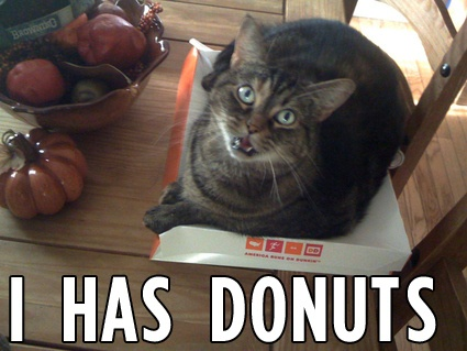 Cats Eating Going Nom Nom Nom