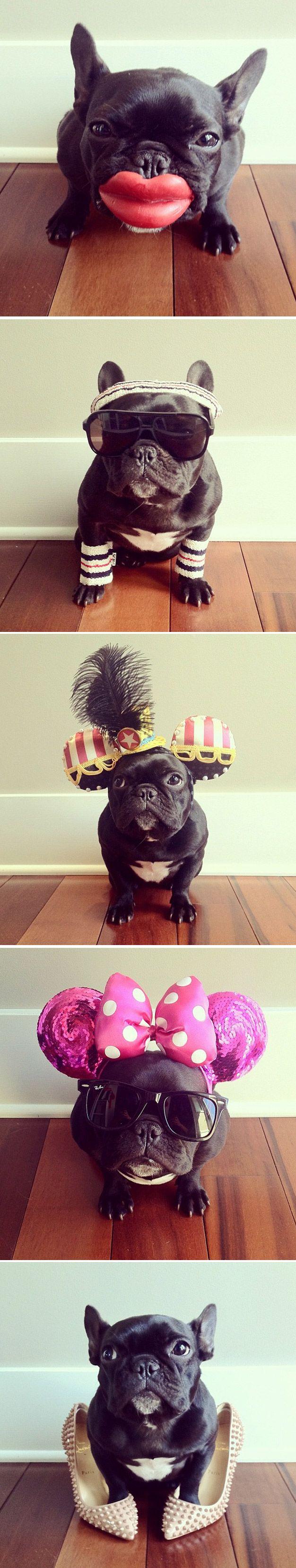Sonya Yu, passou a publicar no seu Instagram fotos do seu cãozinho Trotter, um adorável bulldog francês de um ano de idade, com os mais diversos e divertidos looks imagináveis.