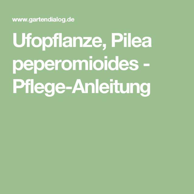 Ufopflanze, Pilea peperomioides - Pflege-Anleitung