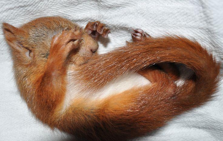 Arne sleeping (5 weeks)