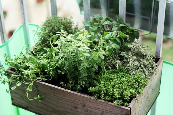 """Grow a balcony herb garden to reap the many benefits of herbs while living in the city. Get started with these tips!"" -Mother Earth Living article share"