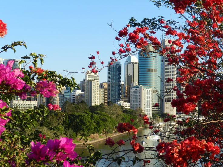 Brisbane City framed by bougainvilleas