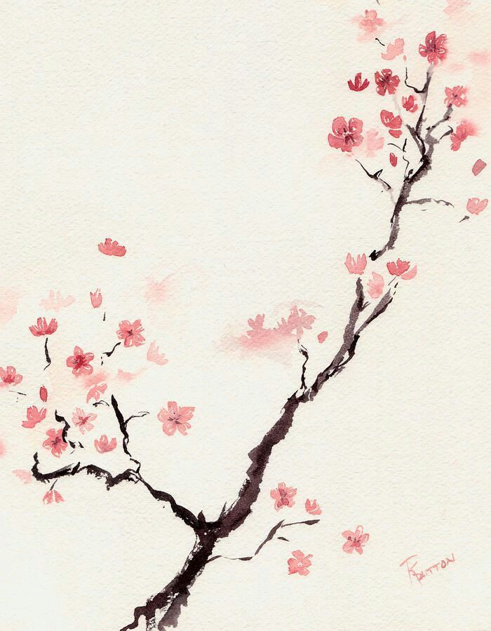 Cherry blossom water colour