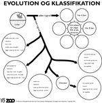 ::: Biologforbundet ::: Evolution, ideer til at elever kan lære om evolution gennem aktivitet.