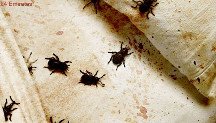 List Of Things That Kill Bed Bugs