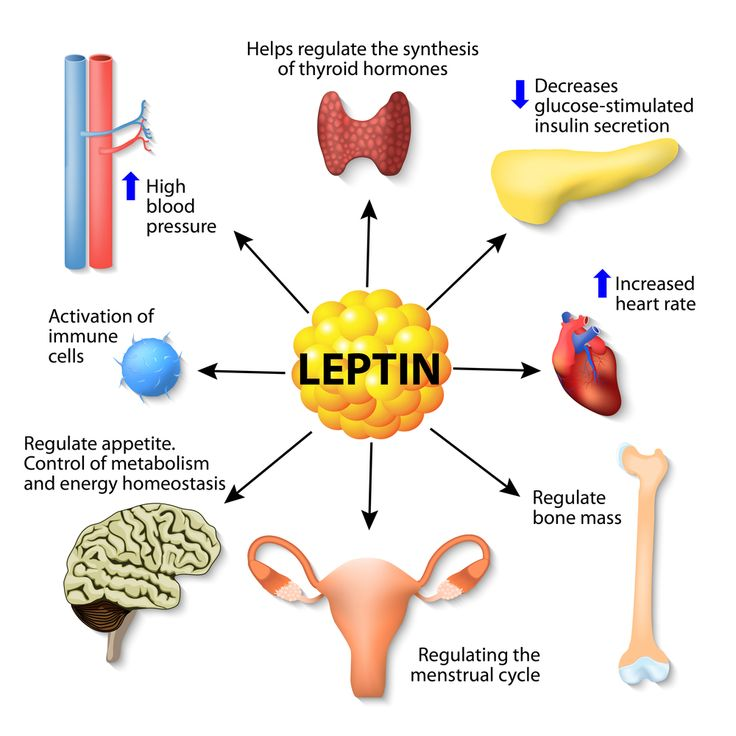 Leptin ,Leptin Resistance Diet & Weight Loss: All You Need to Know