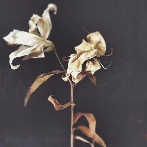 lilium   mady dooijes   instagram