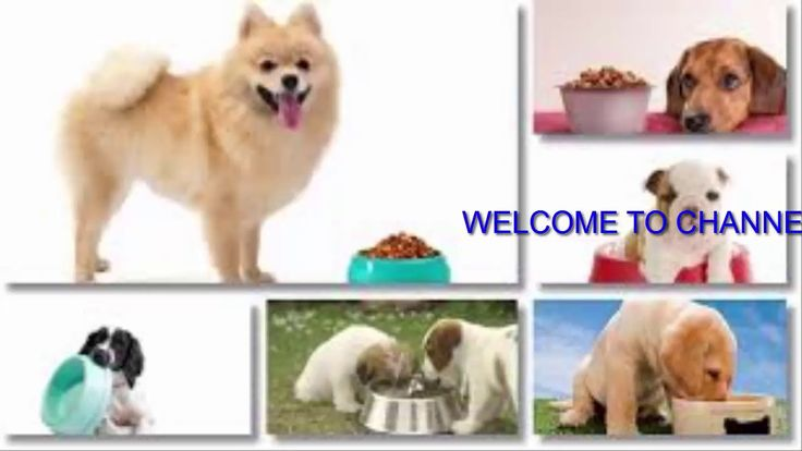 Mejores 7 imgenes de dog food secrets reviews dog food secrets pdf dog food secrets recipes free 10 the best for your dog in 2016 forumfinder Choice Image
