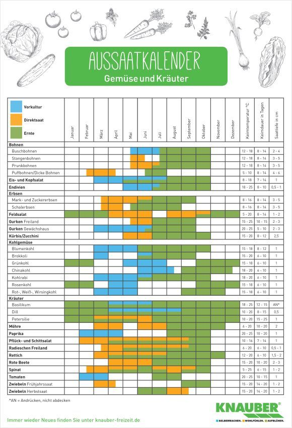 Kalender für die Aussaat und Ernte von Gemüse und Kräutern – Knauber WeltKnau