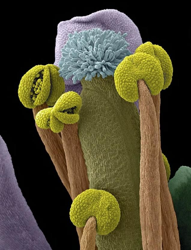 263 Best Pistils And Stamens Images On Pinterest  Rare -9094