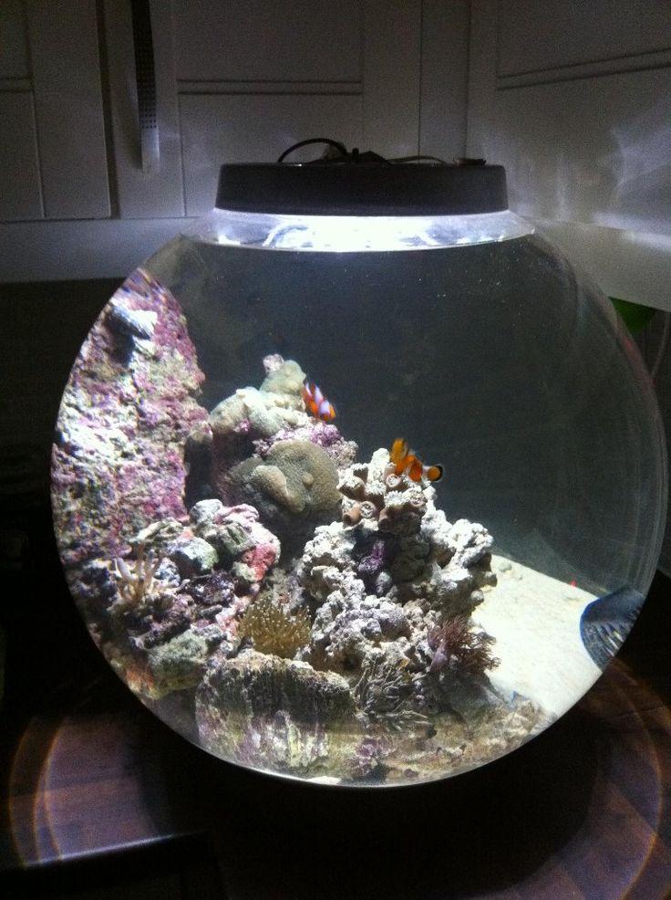 Biorb Setup Ideas Biorb Biorb Fish Tank Fish Tank