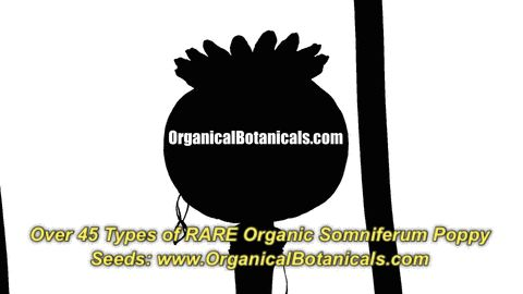 NEW #Mobile Optimized by #AMP:  https://www.organicalbotanicals.com/product-images/amp/