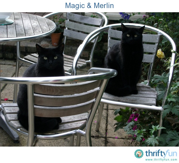 Magic and Merlin sitting outside.