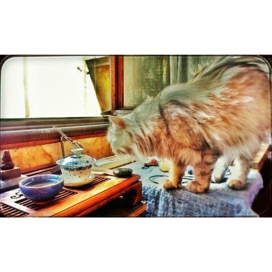 Коточай *)  #кошка #чай #одесса #cat #tea #odessa #ukraine