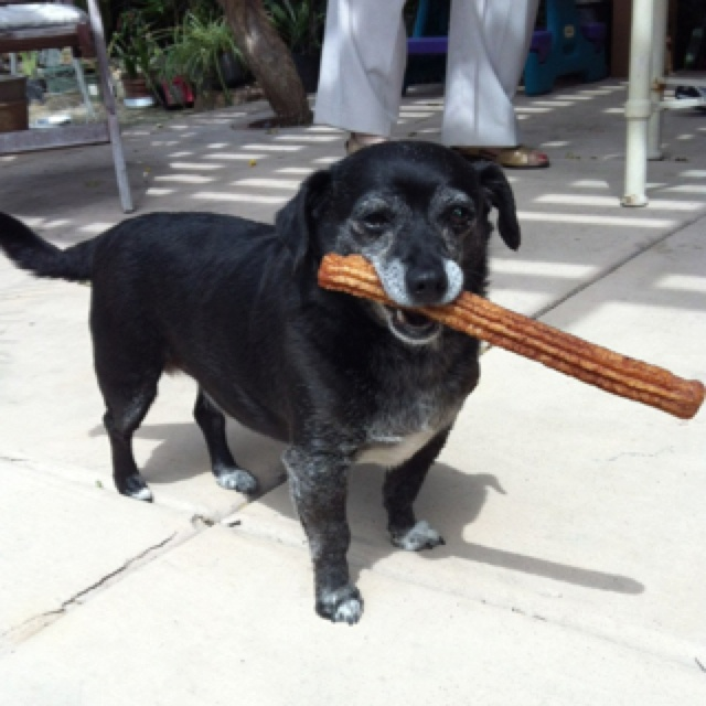 Our dog likes eating churros.Eating Churros, Pets, Dogs Love