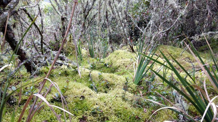 Reserva Quebrada La Vieja, Cundinamarca