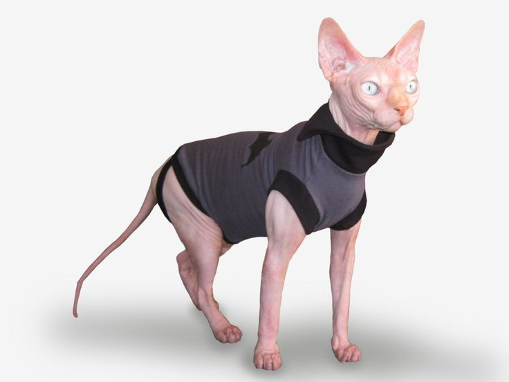Sphynx cat clothing. T shirt for cat. Bat. by VioletCatpets