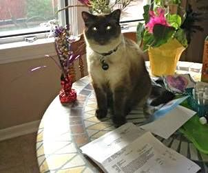 """Lethbridge and Area - Lost & Found Pets Liked · June 27   Posted by JoAnne Druhan Klics on Wednesday, June 26th/2013: - LOST - """"My beautiful Cat has been gone for a couple of weeks!! My phone number is on his tag. Whoever has him should give me a call. Thanks. He is Missing from 9th Avenue and 12B Street North. He has a black spikey collar with name tag, 'GINGABEEF'"""