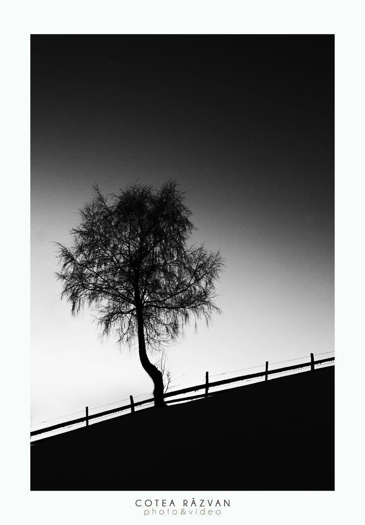 #copac #BW #photo #iarna #lamunte