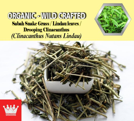 Skin rashes, snake and insect bite, HSV, VZV lesions, inflammatory conditions like hematoma, contusion, strains and sprains of injuries and rheumatism. This plant is widely used for treating gastrointestinal complications, dysentery, dysuria, menstrual function, relieving pain, anemia, jaundice and setting of fractured bones, etc #Driedherbs #herbalremedies #herbalmedicine