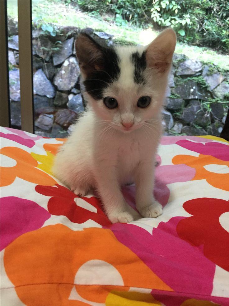 Cute Little Baby Kitten  - Aww!