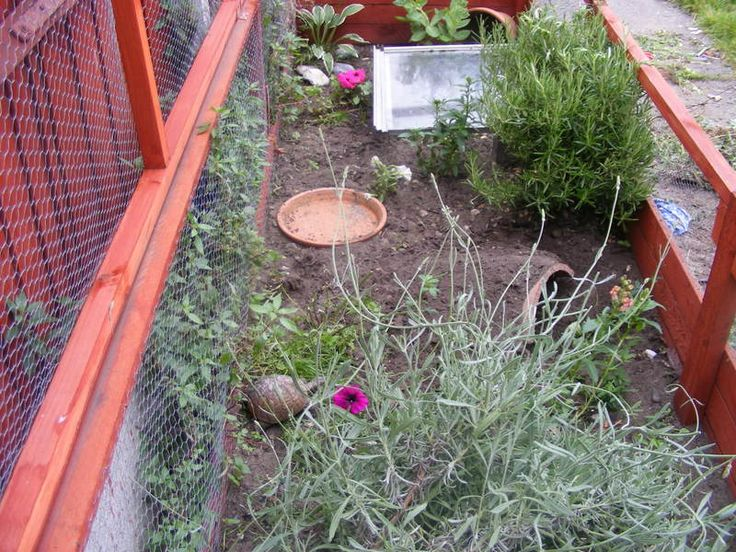 Outdoor tortoise enclosures? - CaptiveBred Reptile Forums, Reptile Classified, Forum