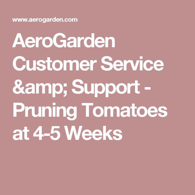 AeroGarden Customer Service & Support - Pruning Tomatoes at 4-5 Weeks