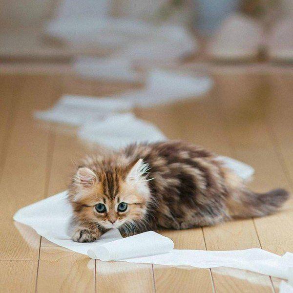 #Cats #Cat #Kittens #Kitten #Kitty #Pets #Pet #Meow #Moe #CuteCats #CuteCat #CuteKittens #CuteKitten #MeowMoe #CuteCats... https://www.meowmoe.com/34432/