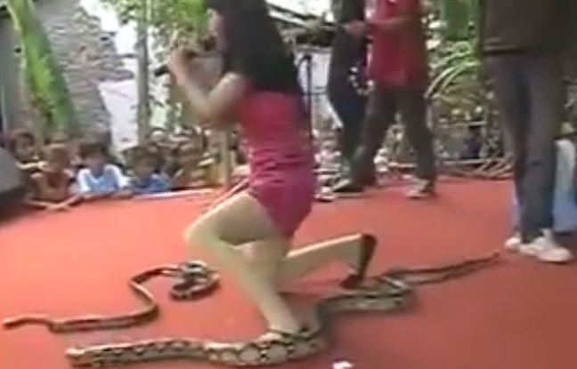 Indonésie: - Une chanteuse meurt, mordue par un cobra pendant un concert - Irma Bule se produisait souvent avec des serpents.