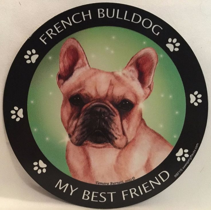 FRENCH BULLDOG (FRENCHIE )~MY BEST FRIEND MAGNETIC MAGNET~NEW~ MADE IN USA.