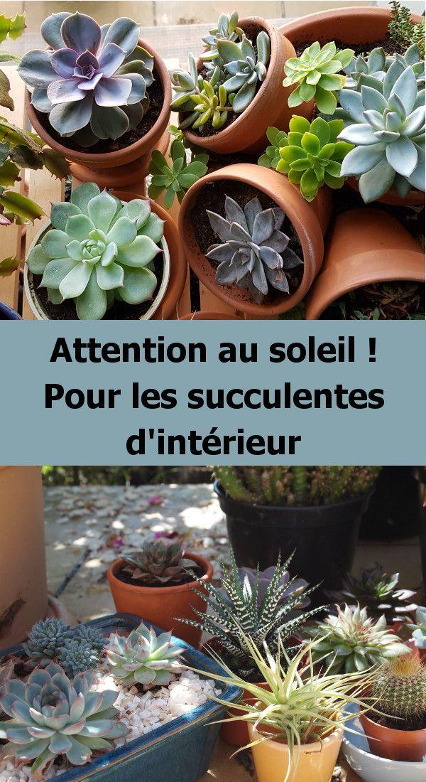 Installer Les Plantes Grasses Et Les Succulentes En Exterieur En