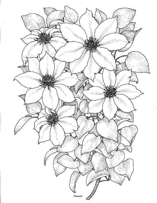 Черно белые картинки с цветами для срисовки, поздравления