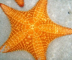 starfish: Color, Beautiful Pattern, Ocean, Marvelous Starfish, Orange Starfish, Beautiful Orange, Beautiful Things, Embossing Project Starfish