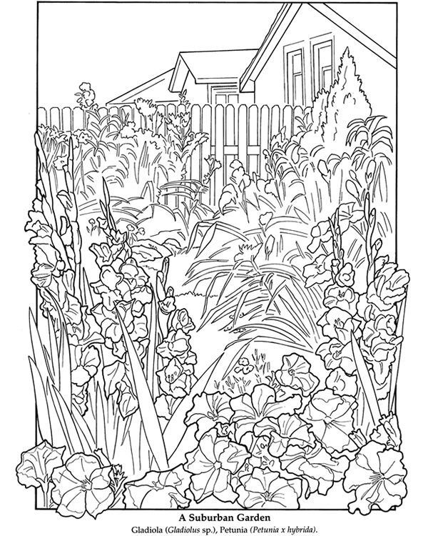 Coloring Pictures For The Top Adult Books And Writing Utensils Including Drawing