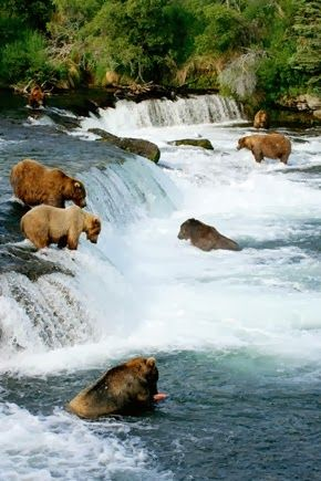 Katmai National Park and Preserve--King Salmon, Alaska. #animals #travel #alaska